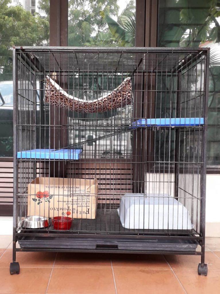 hepicheek cat boarding in Puchong Malaysia