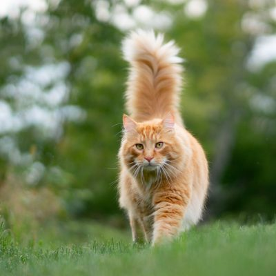 What Your Cat's Tail Behaviour Tells You About Their Mood